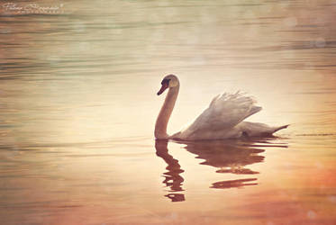 Swan song by LoMiTa
