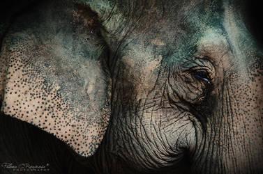 Elephant by LoMiTa