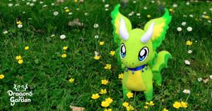 Nigiri the Dragon (on the field) by Dragons-Garden