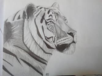 Tiger by misselo83