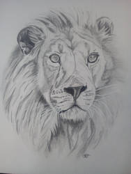Lion by misselo83