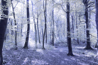 Magic Blue Forest Commission FREE STOCK by Aelathen