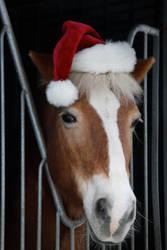 Christmas Horses by webworm