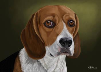 Beagle by petanimalia