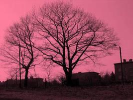 Trees by Bazibuzu