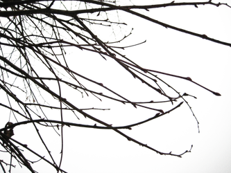 Branches II PNG by simfonic