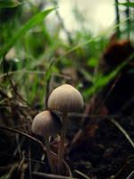 Mushrooms II by simfonic