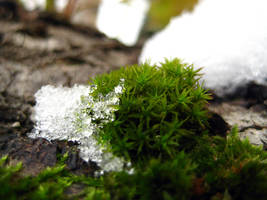Snowy Moss by simfonic