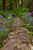 Fallen Tree Path by simfonic
