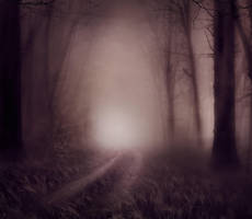 Foggy Wood backgrounds by moonchild-lj-stock