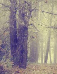 Misty Wood 1 by moonchild-lj-stock