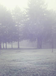 Misty Wood 4 by moonchild-lj-stock