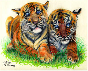 Tiger Cubs by Quillmaster