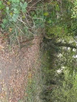 Path 2 by AdenarKaren