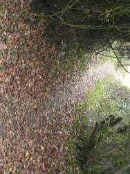 Path 3 by AdenarKaren