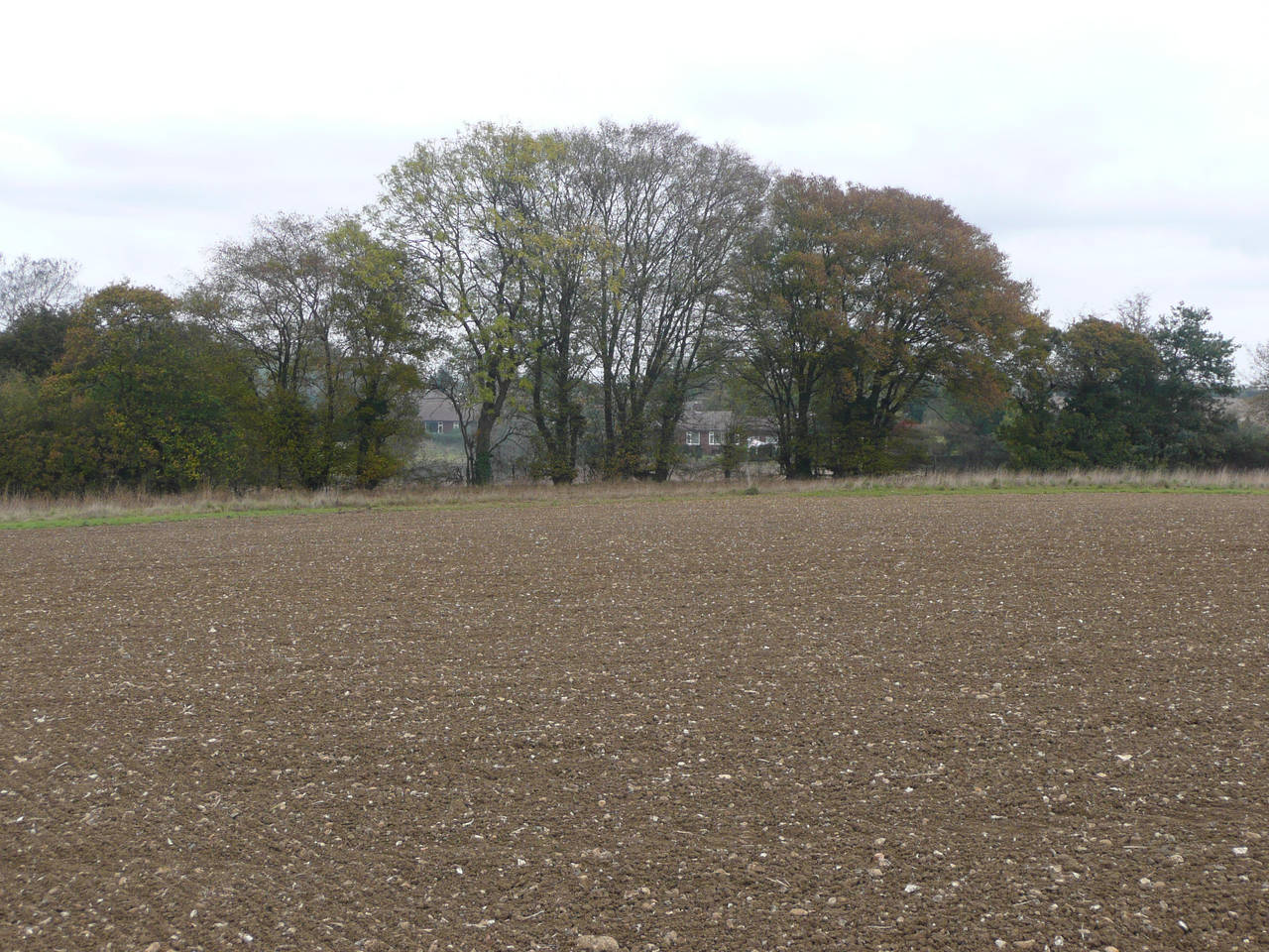 Bare Field 2 by AdenarKaren