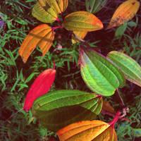 Autumn colors by SpellboundMisfits
