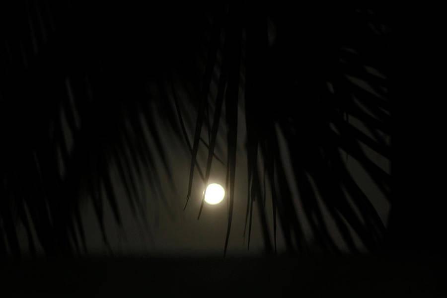 moonlit by SpellboundMisfits