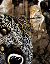 new butterfly by EllerPhotos
