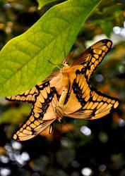 butterfly love by EllerPhotos