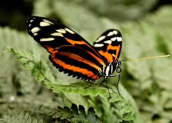 hello butterfly by EllerPhotos