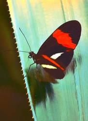 mirror butterfly by EllerPhotos