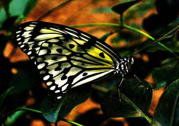glowing butterfly by EllerPhotos