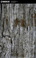 Wood - Old Fence Post by WanderingBert