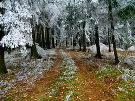 Path from autumn to winter by Aydra