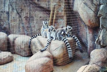 Lemur Life 2 by LeaLion
