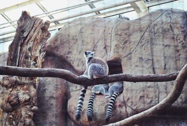 Lemur Life by LeaLion