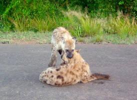 Hyena cub hug by Michi8