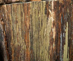 Texture by slinksterdog