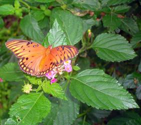 Orange Butterfly by slinksterdog