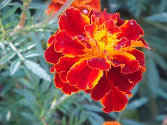 Flower 4 by AlphaPrimeDX