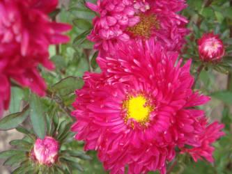 Flower 5 by AlphaPrimeDX
