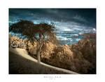 Barnes Park HDRi IR by Wayman