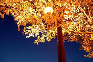 Golden Tree by Sun-Shadow