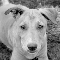Doggie by Sun-Shadow