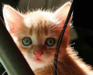 Cute Kitten 05 by gamebalance
