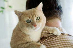Cat loves his owner by gamebalance
