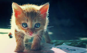 Cute Kitten 07 by gamebalance