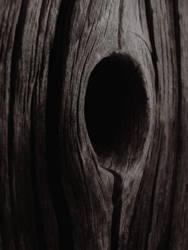 Wood always keeps a secret by Nahuask