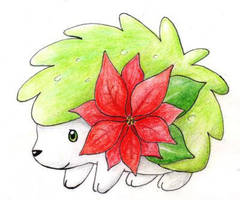 Christmas Shaymin by ShrubSparrow