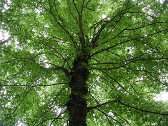 The Tree by Ceejay8887