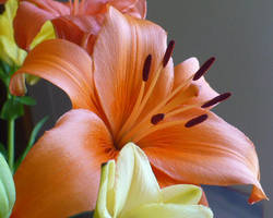 Bright and Orange by Bloeisie