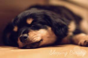 Sleeping Beauty by ohstlin