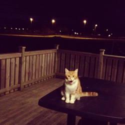 meow by Luua