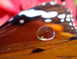 water drop in butterfly wing by lindahabiba