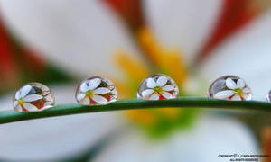 The beauty in a water droplet by lindahabiba